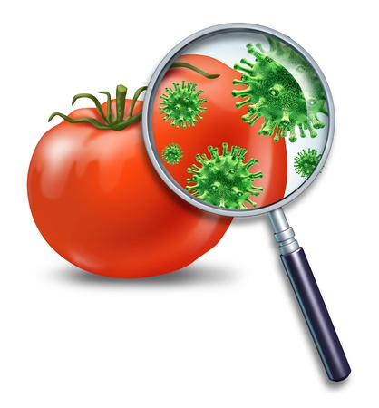 safety: Food safety and inspection symbol represented by a magnifying glass looking closely at a virus bacterial infection on a tomato representing the dangers of produce contamination and the health concerns for human consumption. Stock Photo