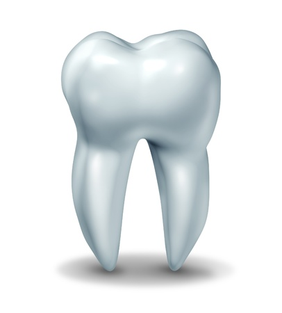 tooth root: Dentist tooth symbol for dental clinic and oral surgeon representing dentist medicine and dentistry surgery represented by a healthy cavity free frontal view white single molar tooth on a white background with a shadow. Stock Photo