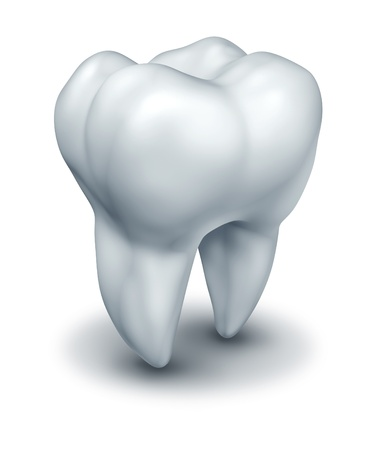 dentistry: Human tooth dental symbol representing dentist medicine and dentistry surgery represented by a white single molar tooth on a white background. Stock Photo