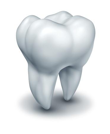 odontologia: S�mbolo de los dientes humanos que representan a la medicina dental dentista odontolog�a y la cirug�a representada por un solo diente molar blanco sobre un fondo blanco.