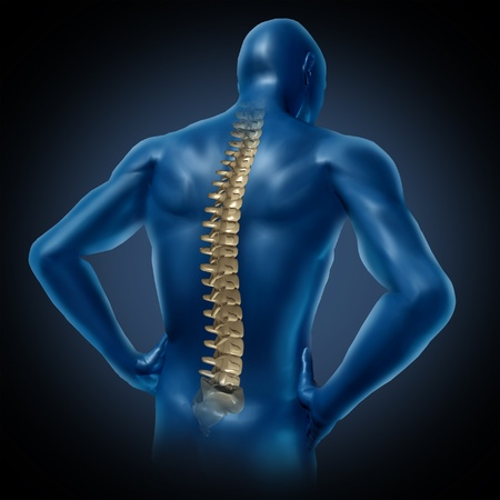 human back pain spinal cord skeleton body anatomy Stock Photo - 11718487