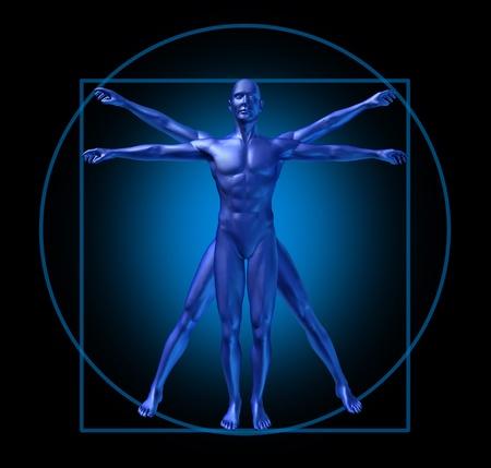 vitruvian: human diagram vitruvian classic man Stock Photo