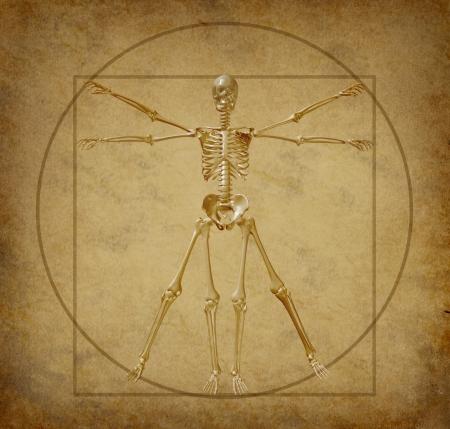 uomo vitruviano: vitruvian scheletro umano grunge pergamena schema medico Archivio Fotografico