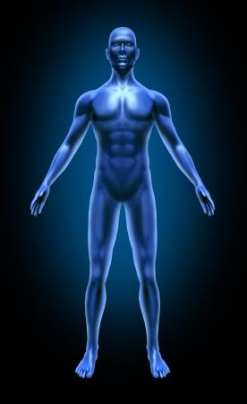 anatomie humaine: Corps humain x-ray m�dicaux posent joints de tableau muscles du symbole bleu