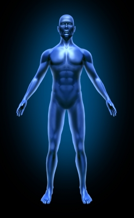 anatomy muscles: Human body medical x-ray pose chart joints muscles blue symbol