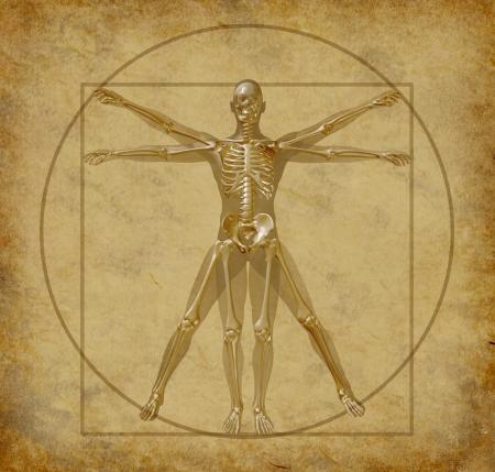 vitruvian: vitruvian-human-diagram-grunge-medical  Stock Photo