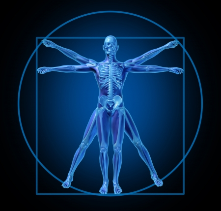 anatomie humaine: vitruvian-humain-diagramme m�dical
