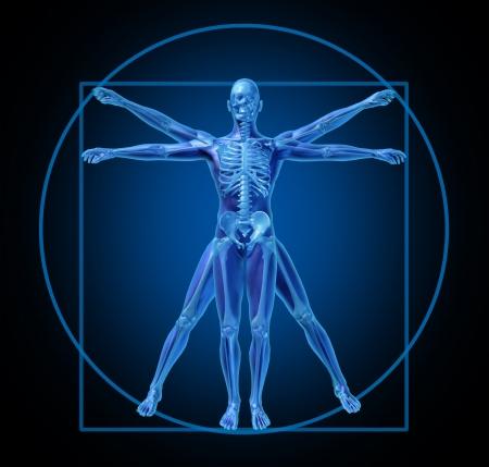 anatomie mens: Vitruvius-mens-diagram-medische Stockfoto