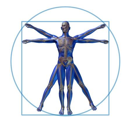 uomo vitruviano: scheletro di uomo vitruviano moderno isolato x-ray