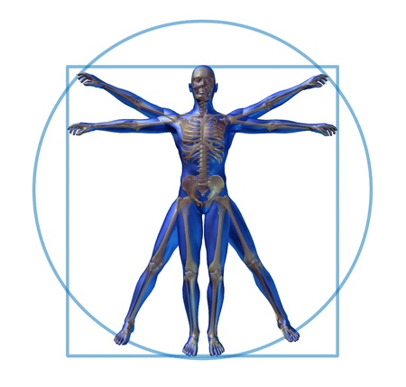vitruvian man modern skeleton isolated x-ray  photo