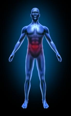 poisoning: Il corpo umano gastro intestinale cancro del colon ulcera intossicazione alimentare medico x-ray posa muscoli articolazioni blu Archivio Fotografico
