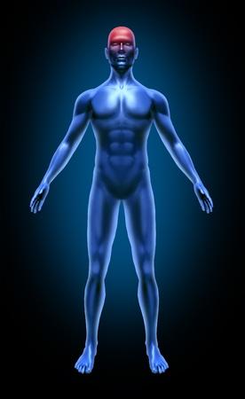 circolazione: Corpo umano mal di testa emicrania ictus cerebrale incidente circolazione neurologia medico x-ray posa muscoli articolazioni blu