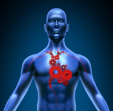 organi interni: Il corpo umano con valvole cardiache medica ingranaggi flusso di sangue simbolo di pompaggio circolazione coronarica Archivio Fotografico