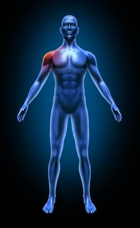 dolor hombro: Hombro del cuerpo humano dolor accidente m�dico xray plantean los m�sculos articulaciones azul Foto de archivo