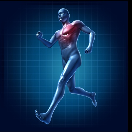 cardiovascular exercising: Running human with heart and lungs region highlighted representing cardiovascular health