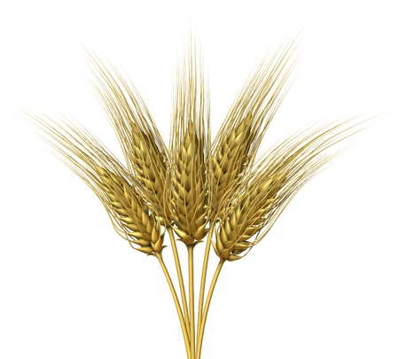 Wheat design on a white background as a group of growing natural grass plants for farming and harvesting a healthy  high fibre yellow golden grain crop for a bakery and baked goods like bread and cereals. Stock Photo - 11382063