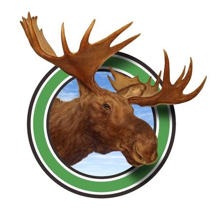 사슴 머리 뿔 숲 아이콘이 책임 사냥과 자연 보존을위한 캐나다와 미국의 북쪽 산의 야생 동물에서 북부 군을 나타내는 흰색 배경에 고립.