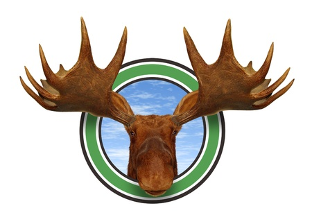 moose antlers: Moose head front view of antlers forest icon isolated on white background representing northern fauna from the wildlife of the Canadian and American north mountains for responsible hunting and natural preservation. Stock Photo