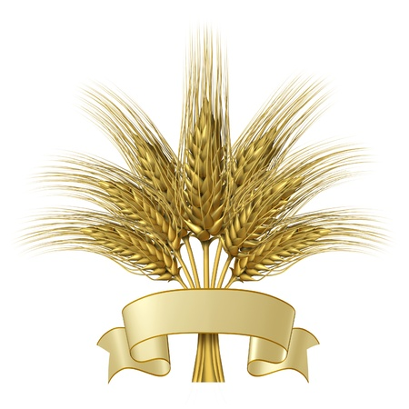 Wheat design with a blank ribbon banner as a group of growing natural grass plants for farming and harvesting as a healthy high fibre yellow golden grain crop for a bakery and baked goods. Stock Photo - 11718584