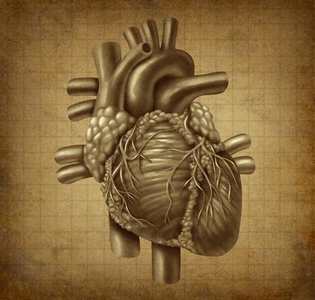 Menselijk hart in oude vintage grunge parchement textuur als medisch symbool van het bloed pompen cardiale innerlijke orgaan als gezondheid en geneeskunde concept voor de behandeling van cardiovasculaire diagnose van klinische symptomen. Stockfoto