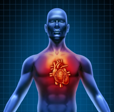 four chambers: Human torso with red high lighted heart anatomy from a healthy body on a blue background as a medical health care symbol of an inner cardiovascular organ. Stock Photo