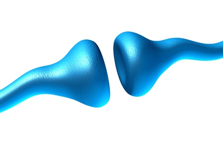 Sinapsis y neuronas células sobre un fondo blanco el envío de señales eléctricas y químicas de señalización de las células receptoras humanos como la neurotransmisión en el cerebro y sistema nervioso en la función de la anatomía del cuerpo. Foto de archivo - 11718530