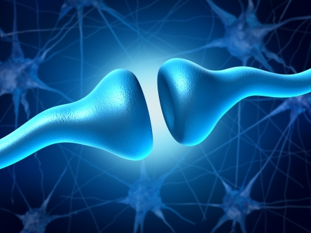 brain function: Synapse and Neurons sending electrical signals and chemical signaling to human receptor cells as a neurotransmission for the brain and nervous system in the function of anatomy of the body.