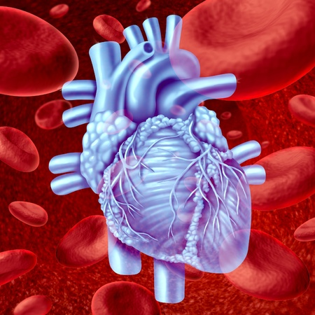 heart disease: Human Heart Blood Flow anatomy with microscopic red blood cells flowing in an artery or vein as a human circulatory system medical health care symbol of an inner cardiovascular organ.