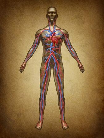 organi interni: Umano la circolazione del sangue circolazione clolor grunge vintage nel sistema cardiovascolare con l'anatomia cuore da un corpo sano sulla vecchia pergamena come simbolo di assistenza medica di salute di un organo interno come una cartella clinica per l'educazione sanitaria.
