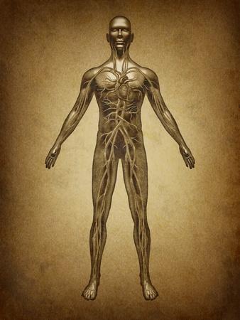 人間グランジ ヴィンテージで血液の循環古いパーチメントで健康的な体から心臓の解剖学と心血管系内部器官の医療保健医療のシンボルとして健康
