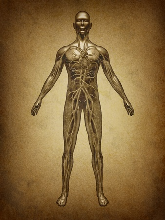 human anatomy: Human blood grunge vintage circulation in the cardiovascular System with heart anatomy from a healthy body on old parchement as a medical health care symbol of an inner organ as a medical chart for health education.
