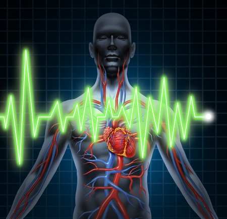 heart attack: ECG and EKG  cardiovascular system monitoring with heart anatomy from a healthy body on black background
