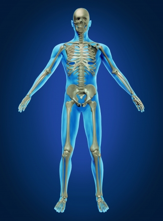 scheletro umano: Il corpo umano e lo scheletro con l'anatomia scheletrica in un riposato posa su uno sfondo blu scuro come un concetto di assistenza sanitaria e medica.