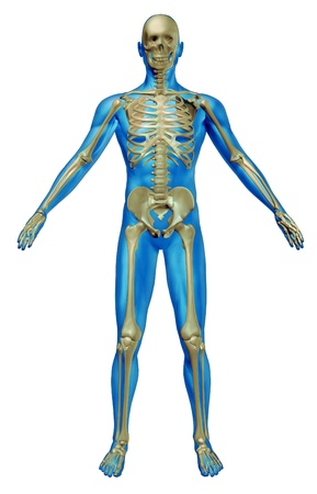 Human skeleton and body with the skeletal anatomy in a rested pose on a white background as a health care and medical concept.