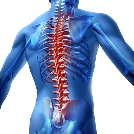 Human body backache and back pain with an upper torso body skeleton showing the spine and vertebral column in red