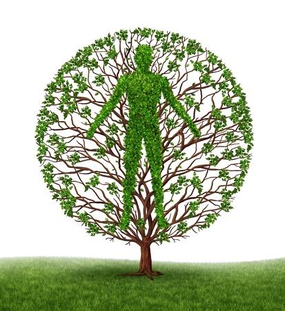 persoonlijke groei: Boom met takken en groene bladeren in de vorm van een personen anatomische lichaam op wit Stockfoto