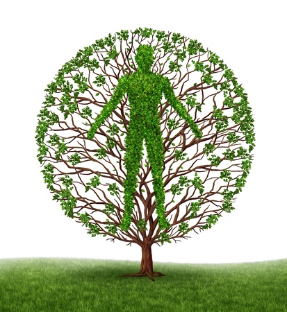 Tree with branches and green leaves in the shape of a persons anatomical body on white photo