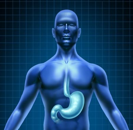 желудок: Желудка и пищеварения человека с медицинским схему верхней части тела с пищеварительной системой, содержащей выделенное органа с сеткой на черном фоне в качестве желудочного значок здравоохранения Фото со стока