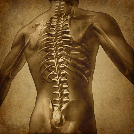 sacral spine: Human back medical document an old vintage grunge texture on parchment paper for backache and back pain with an upper torso body skeleton showing the spine and vertebral column as a medical health care concept for spinal surgery and therapy