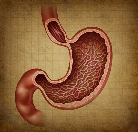 dolor de estomago: Est�mago diagrama de la anatom�a del �rgano digestivo interno humano con una cruz dentro de la secci�n m�dica de la parte del cuerpo que digiere los alimentos con los jugos g�stricos como un icono de la salud como una ilustraci�n en papel de color beige pergamino antiguo del grunge