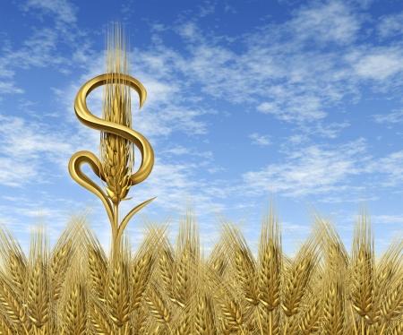 weizen ernte: Geld Ernte-und Cash-Landwirtschaft-Konzept, die die Finanz-und Ertragslage in der Branche f�r die Landwirte verdient und den landwirtschaftlichen Sektor des Lebensmittelmarktes, als ein einziges Weizen-Anlage in der Form eines auf einer Dollarsign Erntezeit Bauernhof-Feld mit Himmel Lizenzfreie Bilder