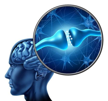 ひと神経細胞シナプス受容体人間の頭と脳と白い背景の上のニューロンの生物的機能か機能神経および認知機能を示す、解剖学の細部の倍率 写真素材