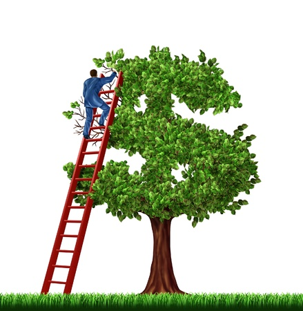 money tree: Wealth management and financial advice with a businessman on a red laddder managing the growth of a money tree shaped as a dollar sign on a white background  Stock Photo