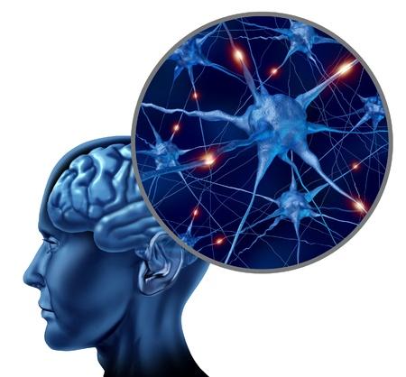메모리와 관련된 정보를 표시하는 뉴런의 닫습니다 및 장기 세포 활동에 의해 표현 인간의 두뇌 의료 기호 스톡 콘텐츠