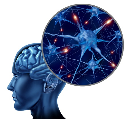 brains: Human brain medical symbol represented by a close up of neurons and organ cell activity showing intelligence related to memory