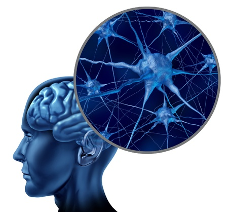 Human brain medical symbol represented by a close up of neurons and organ cell activity showing intelligence related to memory  Stock Photo