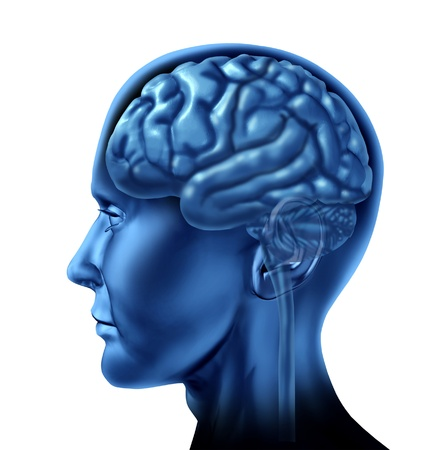 cognitive: Human brain as a side view of the anatomy as a health care symbol of  neurology and memory on a white background