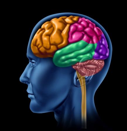 l�bulo: Secciones cerebrales del l�bulo y las divisiones de los l�bulos mentales neurol�gicos como la actividad de inteligencia aislado en un fondo negro