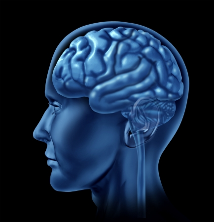 oblongata: Human brain as a side view of the neurological organ on a black background  Stock Photo