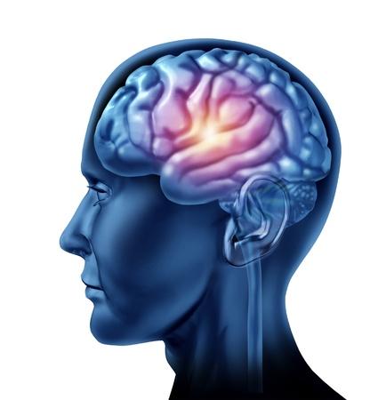 cerebro humano: La chispa de la genialidad s�mbolo representado por una parte brillante de la secci�n central del cerebro que muestra el concepto de la inteligencia y la creatividad